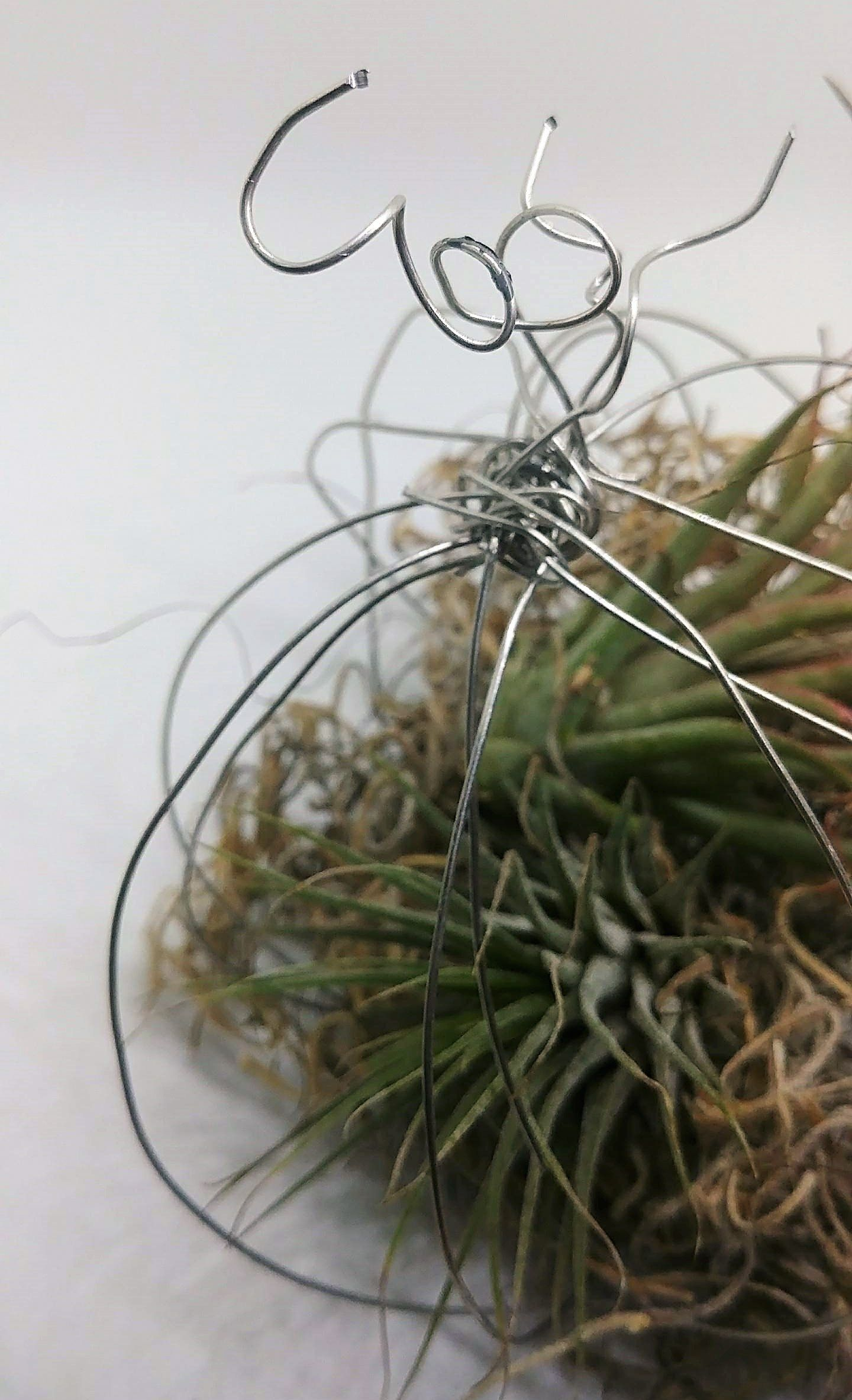 Air Plant Holder DIY Wire Sculpture