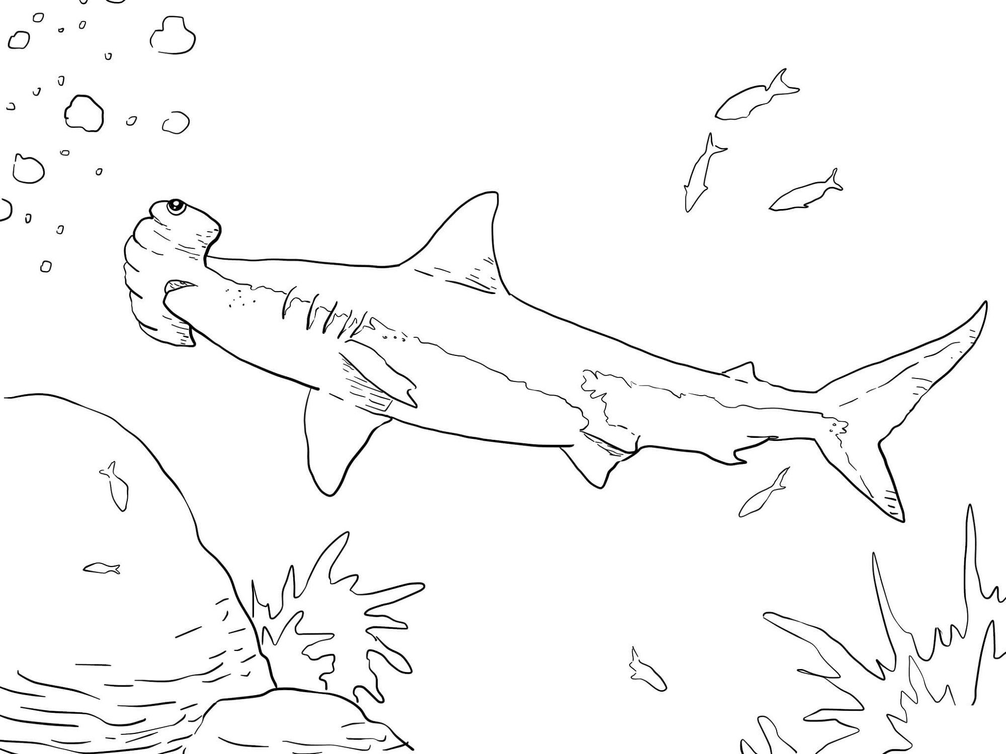 Shark Color Page for Fish Lovers | Kiddo Shelter | Coloring Pages ...