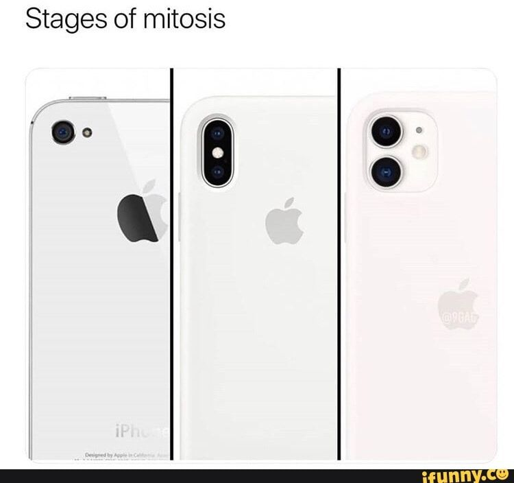 Stages of mitosis , iFunny )