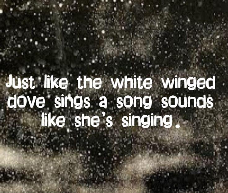 fleetwood mac lyrics sings a song sounds like shes singing