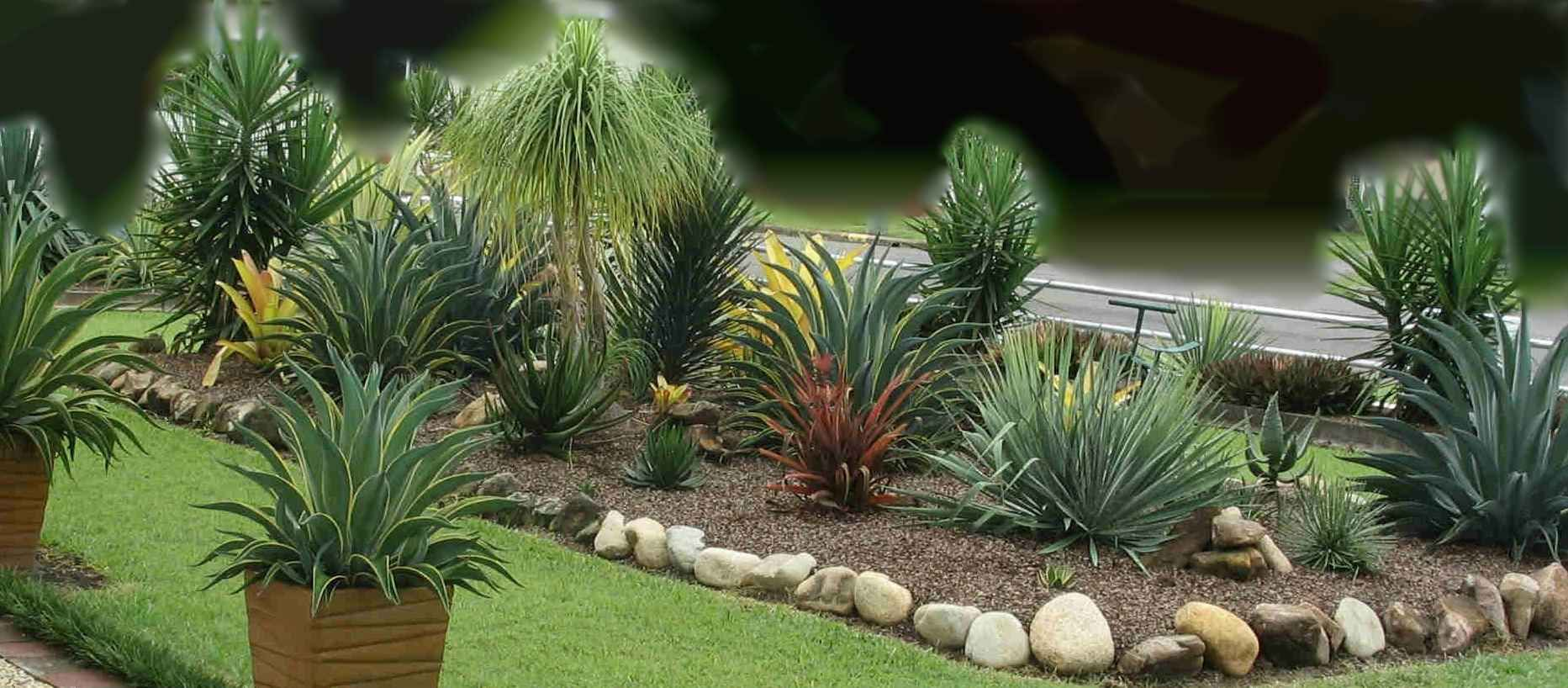 Yucca agave plants landscaping garden design ideas for Plant landscape design