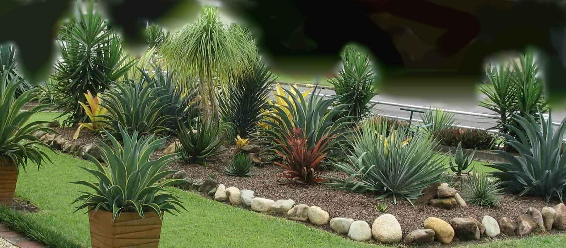 Yucca Agave Plants Landscaping Garden Design Ideas ...