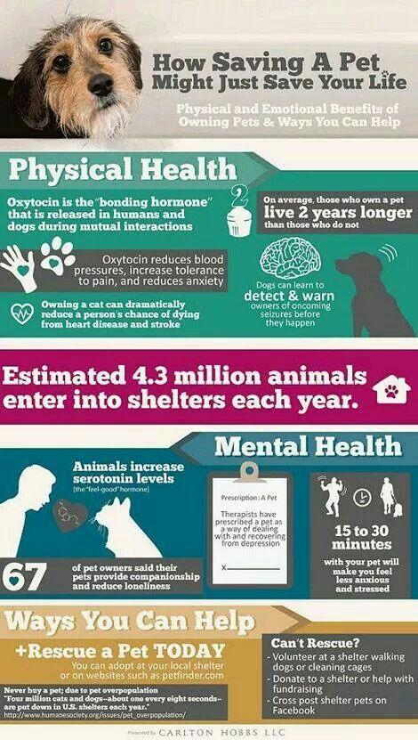 Pin By Donna Saylors On Rescues Pets Dogs Animals
