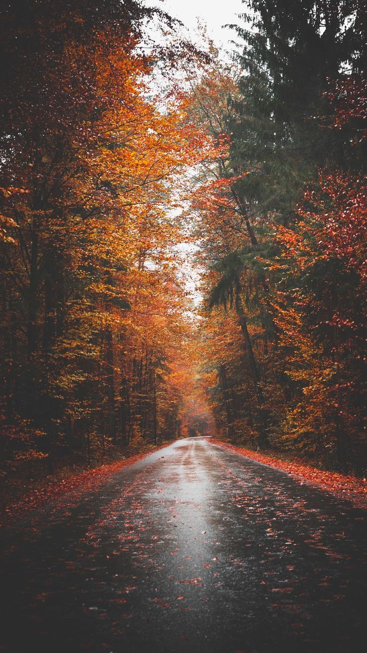 Herbststraße – #Autumn #road #octoberwallpaperiphone