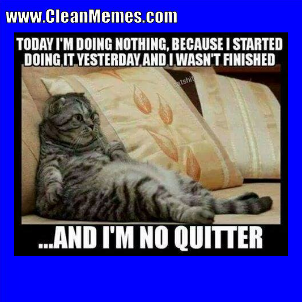 Pin by Clean Memes on Clean Memes Funny cat memes, Funny
