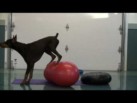 Canine Fitness Zone S Athletic Conditioning Youtube