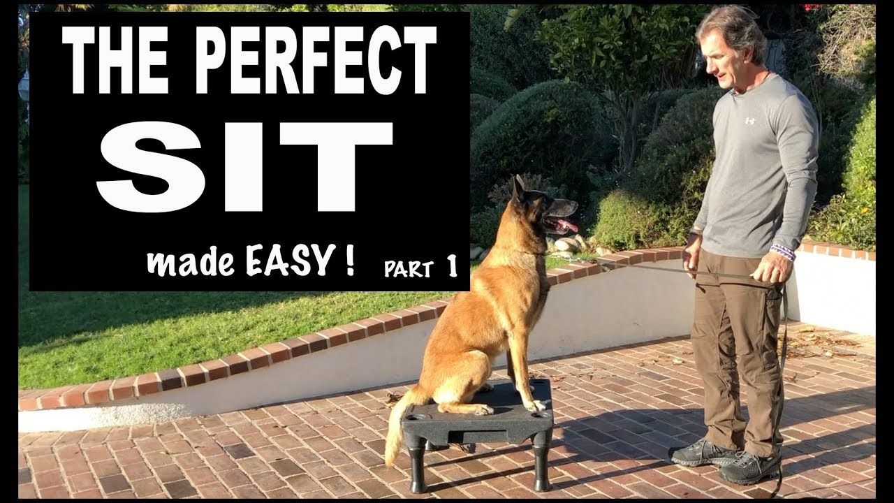 Teach Your Dog Sit On Command Perfect Sit Robert Cabral Dog