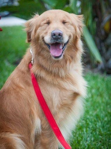 Pets That Sure Look Like They Re Smiling Dog Love Happy Dogs Pets