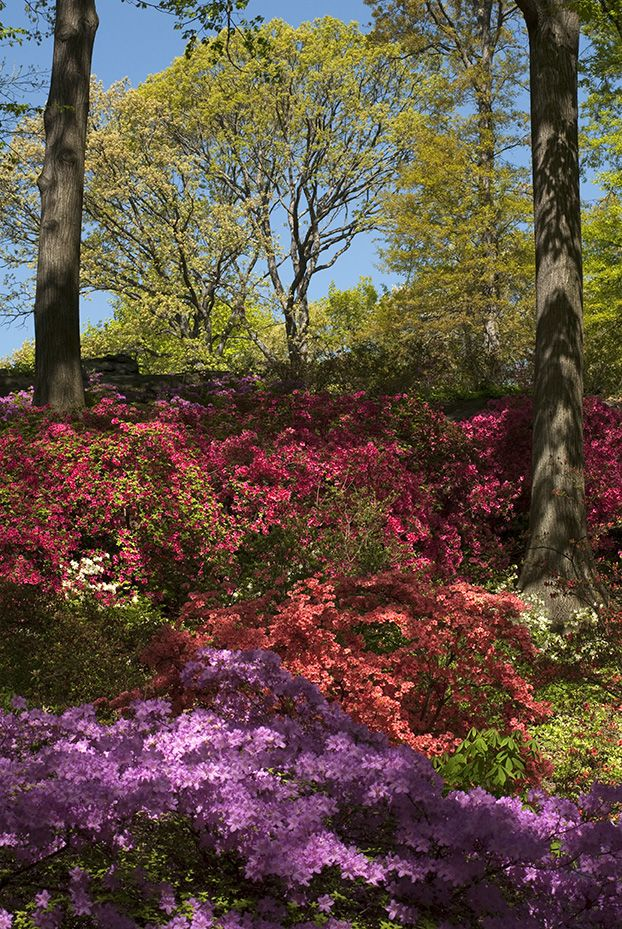 Pin By Catherine Byrne On Shade Gardens Pinterest 400 x 300