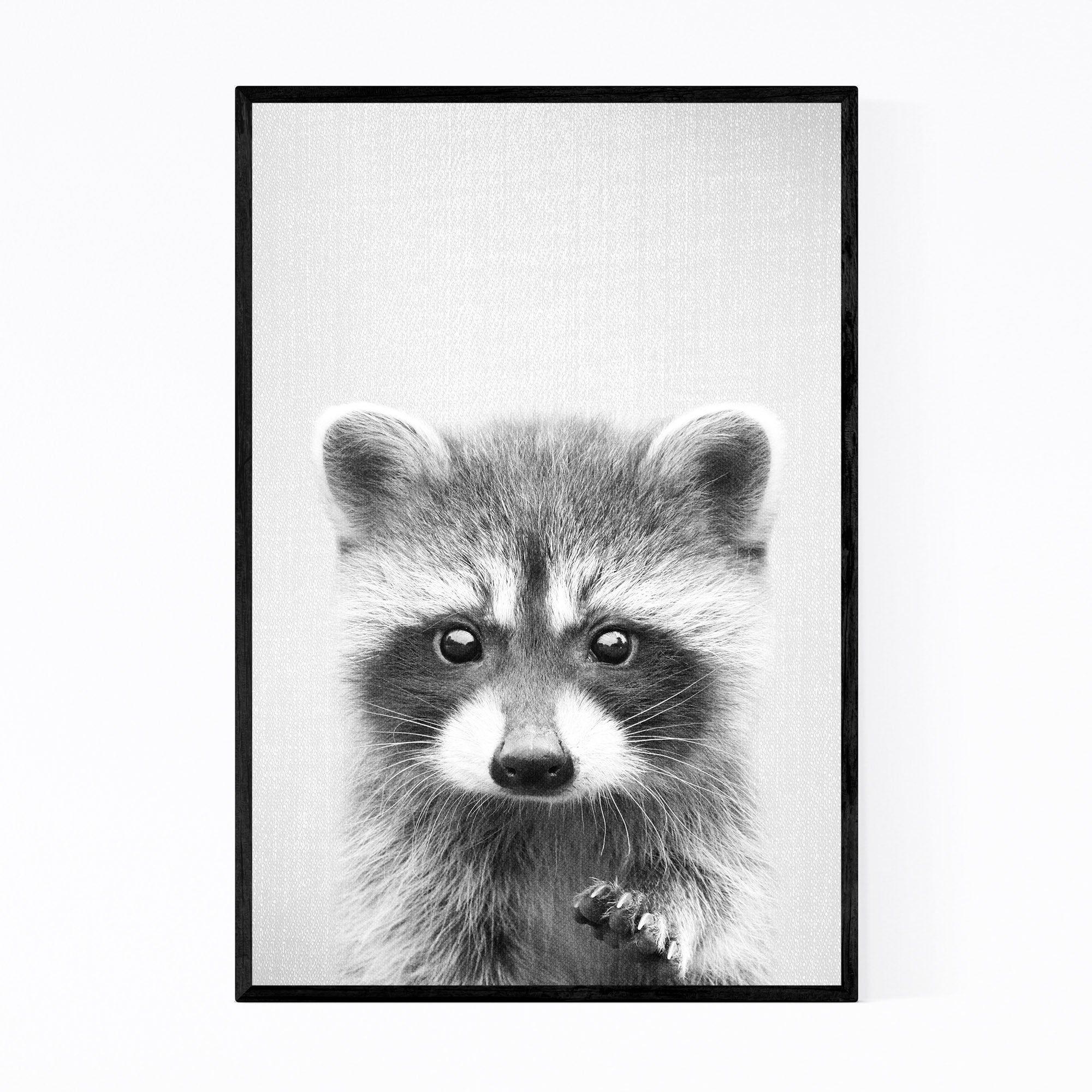 Noir Gallery Raccoon Nursery Peeking Animal Framed Art