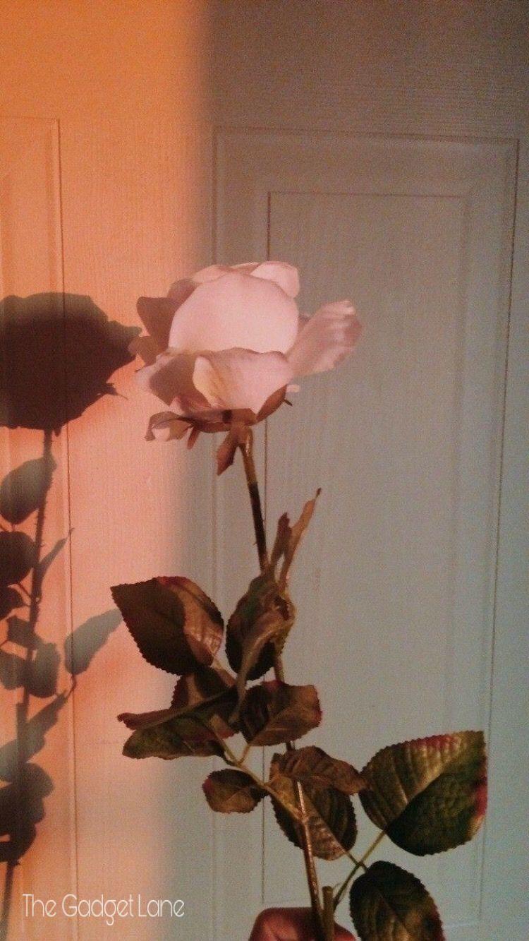 Apple Iphone Wallpaper Aesthetic Roses Rose Gold Aesthetic Flower Aesthetic