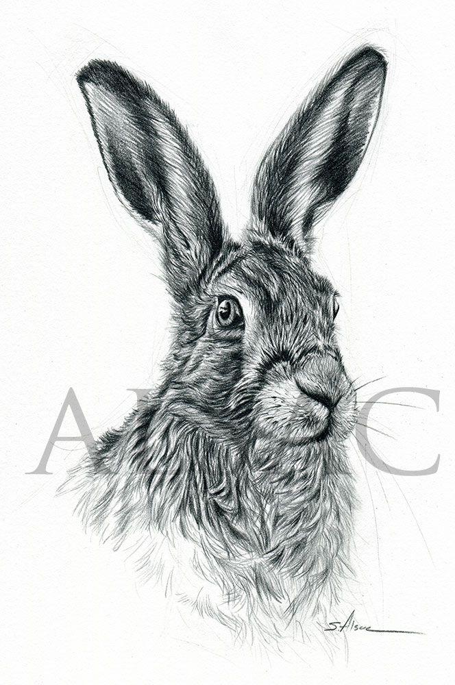 Hare Original drawing. Original Drawing Format : 29 cm x 23 cm ...