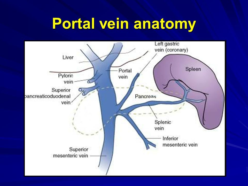 Portal vein anatomy | Anatomy note world | Pinterest | Anatomy ...