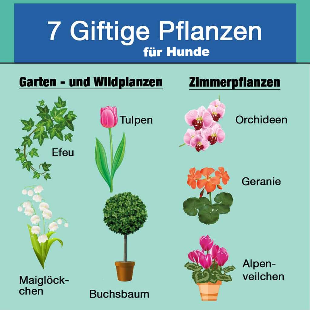 Giftige Pflanzen Im Garten