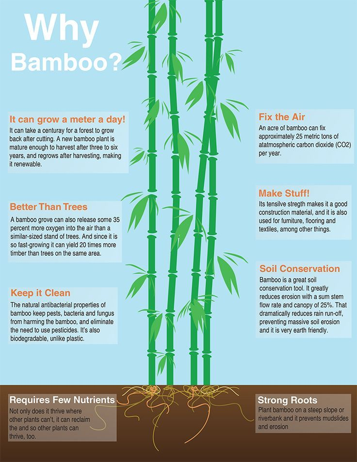 Image Result For Planting Bamboo With Other Plants Bamboo Plants Bamboo Sustainable Garden