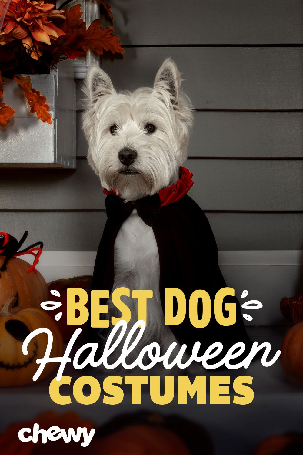 Here Are Our Favorite Halloween Costumes For You And Your Pet Treats Needed To Get Your Cat Or Dog Halloween Costumes Best Dog Halloween Costumes Dog Halloween