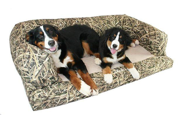 Bernedoodles And Bernese Mountain Dogs For Sell In Oregon