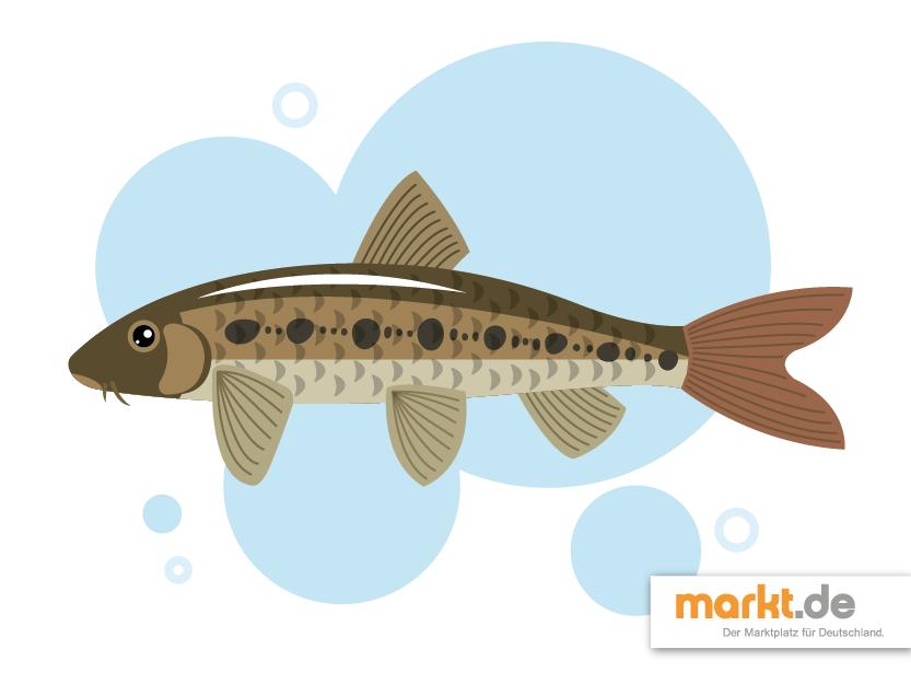 Beliebteste Fische Fur Den Gartenteich Markt De In 2020 Teichfische Teich Fische