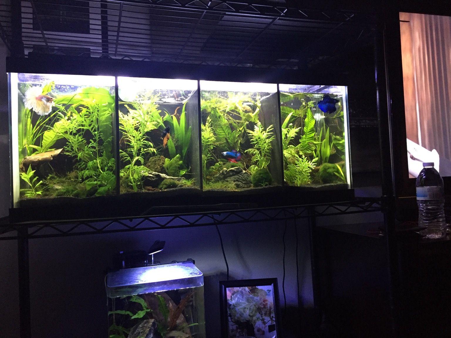 best divided betta tank i ve ever seen 20gal with live plants rh pinterest com best fish aquarium ever best ever aquarium light