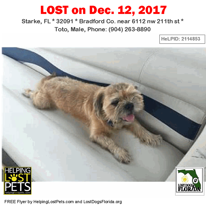 Please spread the word! Toto was last seen near 6112 nw 211th st in ...