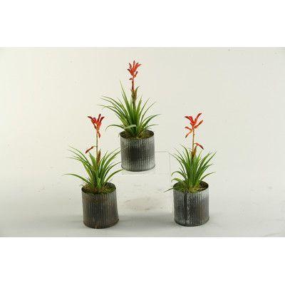 D & W Silks Blooming Succulent Desk Top in Decorative Vase