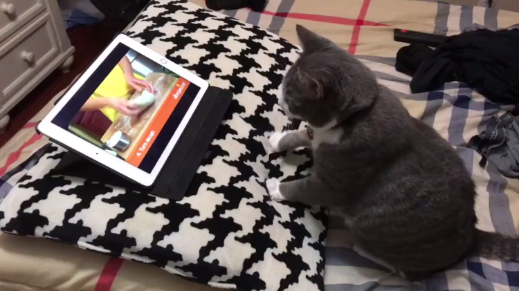 A Studious Cat Quickly Learns How to Make Biscuits by