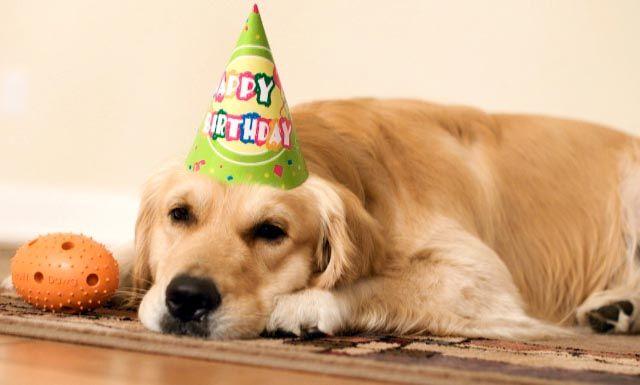 Joyeux Anniversaire Chien Chat Recherche Google Happy Birthday