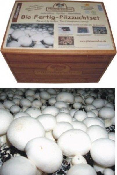 Pilze züchten set