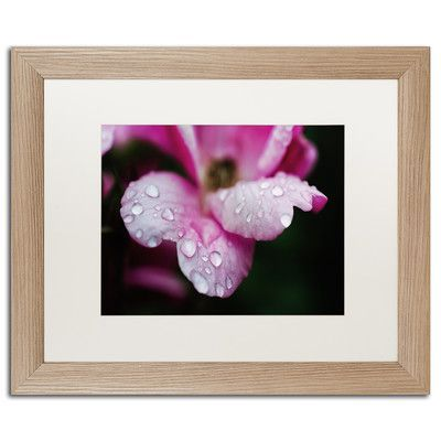 "Trademark Art Raindrops on Wild Rose Color Framed Photographic Print Size: 16"" H x 20"" W x 0.5"" D"
