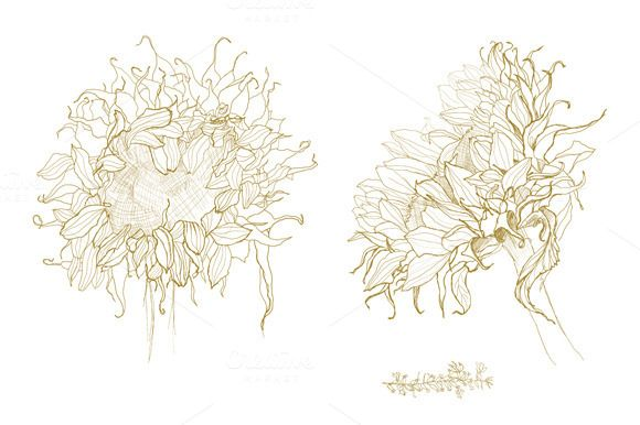 Sunflower Line Drawing : Check out sunflower pen drawing vector by vergasova on creative