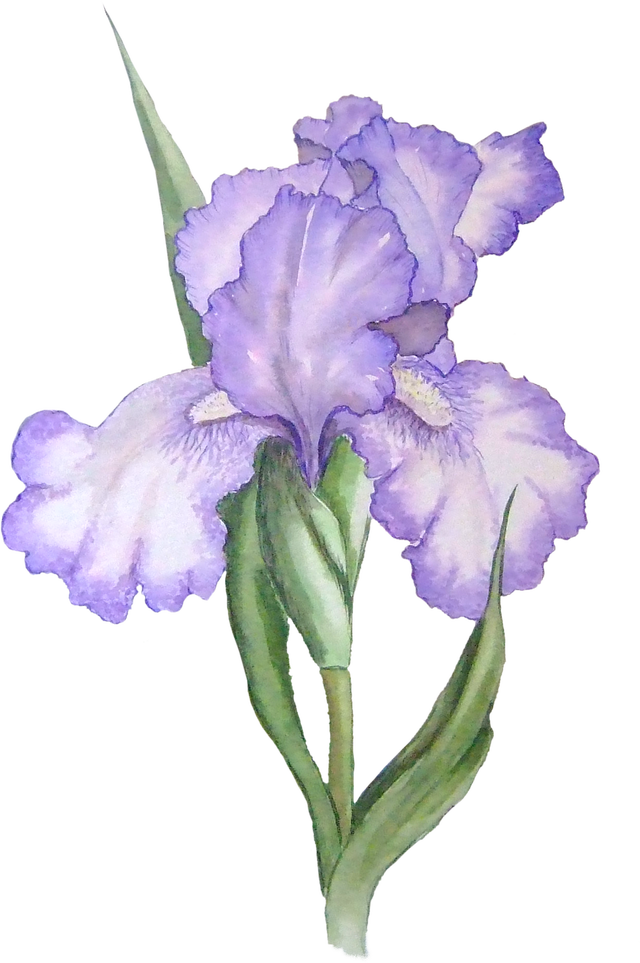 What's a PNG File and How Do You Open One? Iris painting