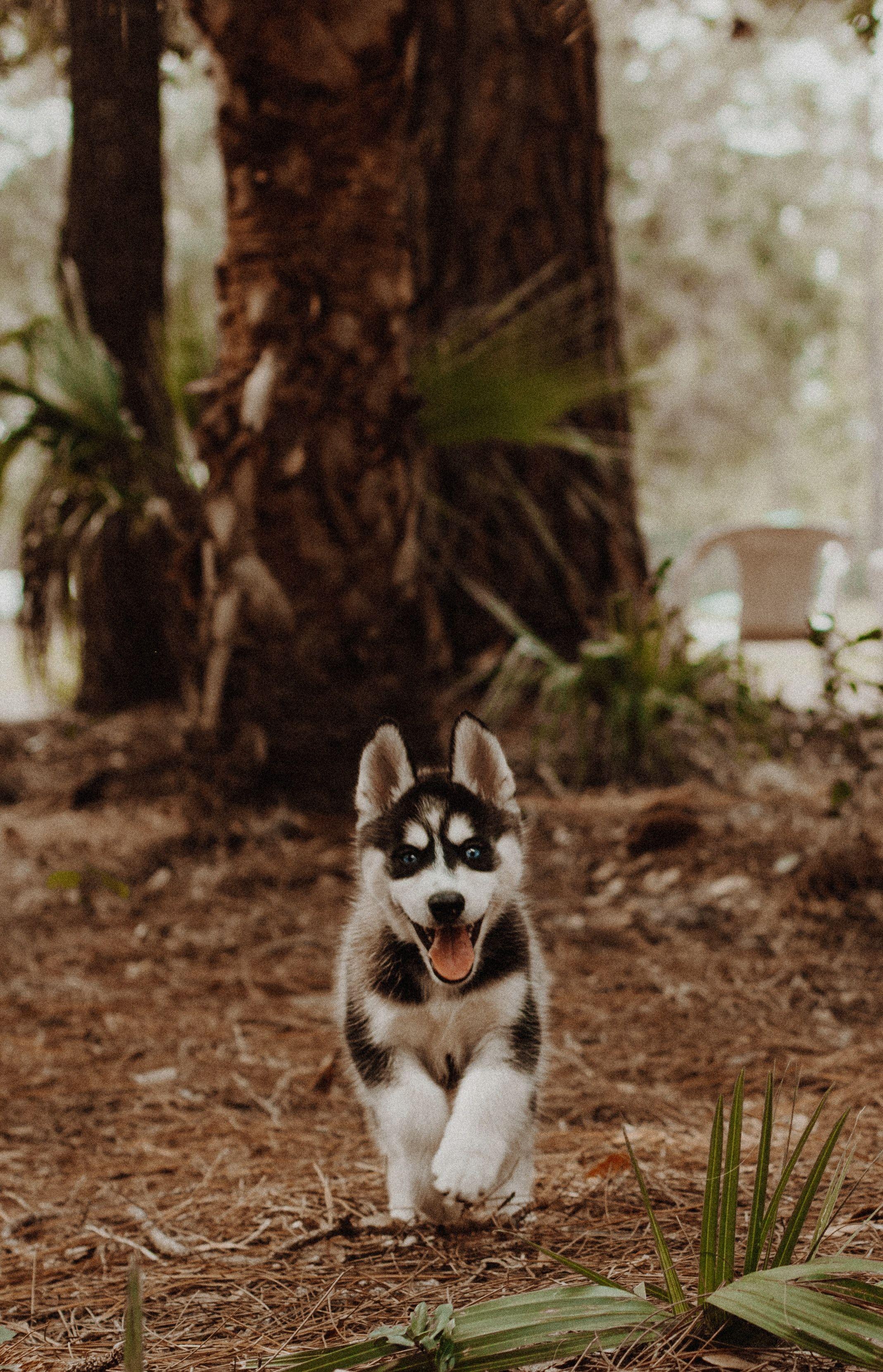 8 Best Saddlebags For Dogs Backpacks For Adventurous Canines