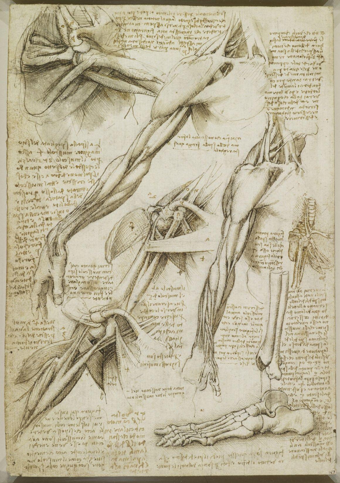 leonardo da vinci disegni - anatomia | Studi di anatomia | Pinterest ...