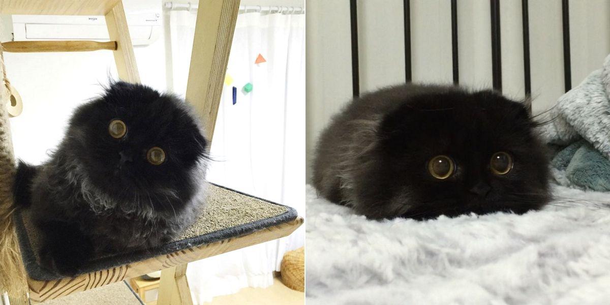 faites connaissance avec gimo un chat qui a l 39 air toujours choqu animaux pinterest chat. Black Bedroom Furniture Sets. Home Design Ideas