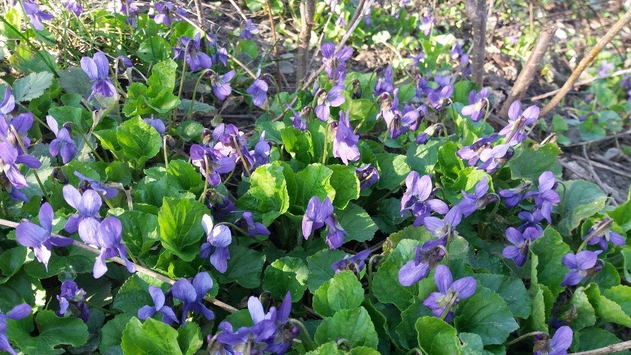 огород весной видео