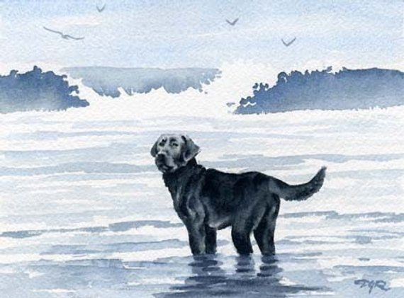 Chesapeake Bay Retriever Art Print Sepia Watercolor Painting by Artist DJR