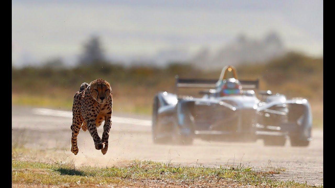 Drag Race Formula E Car Vs Cheetah With Images Formula E