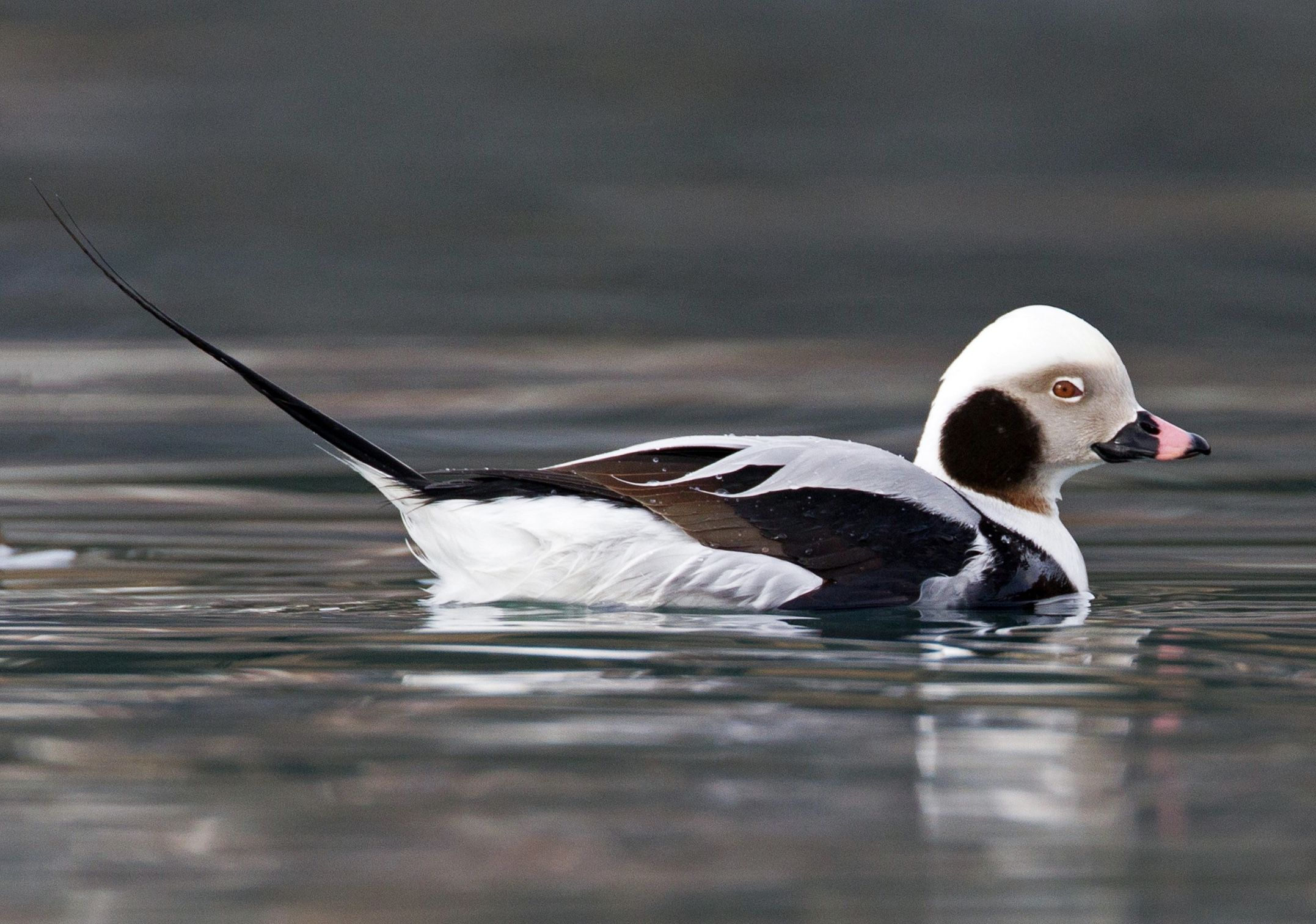 Pin on Ducks