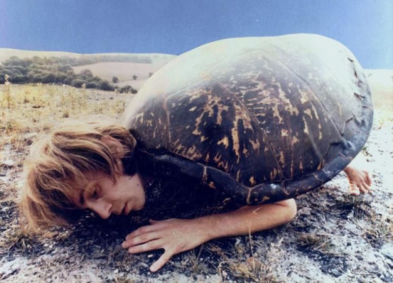 Image result for tortoise julian cope