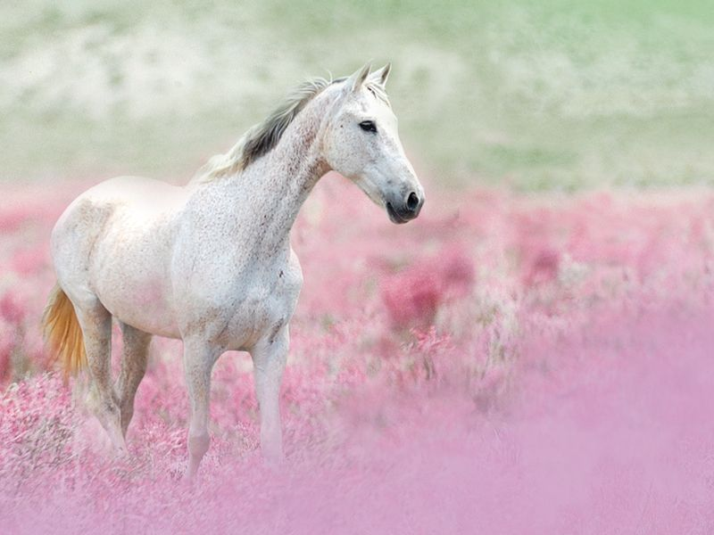 Horse in pink field submitted by © lili11p via