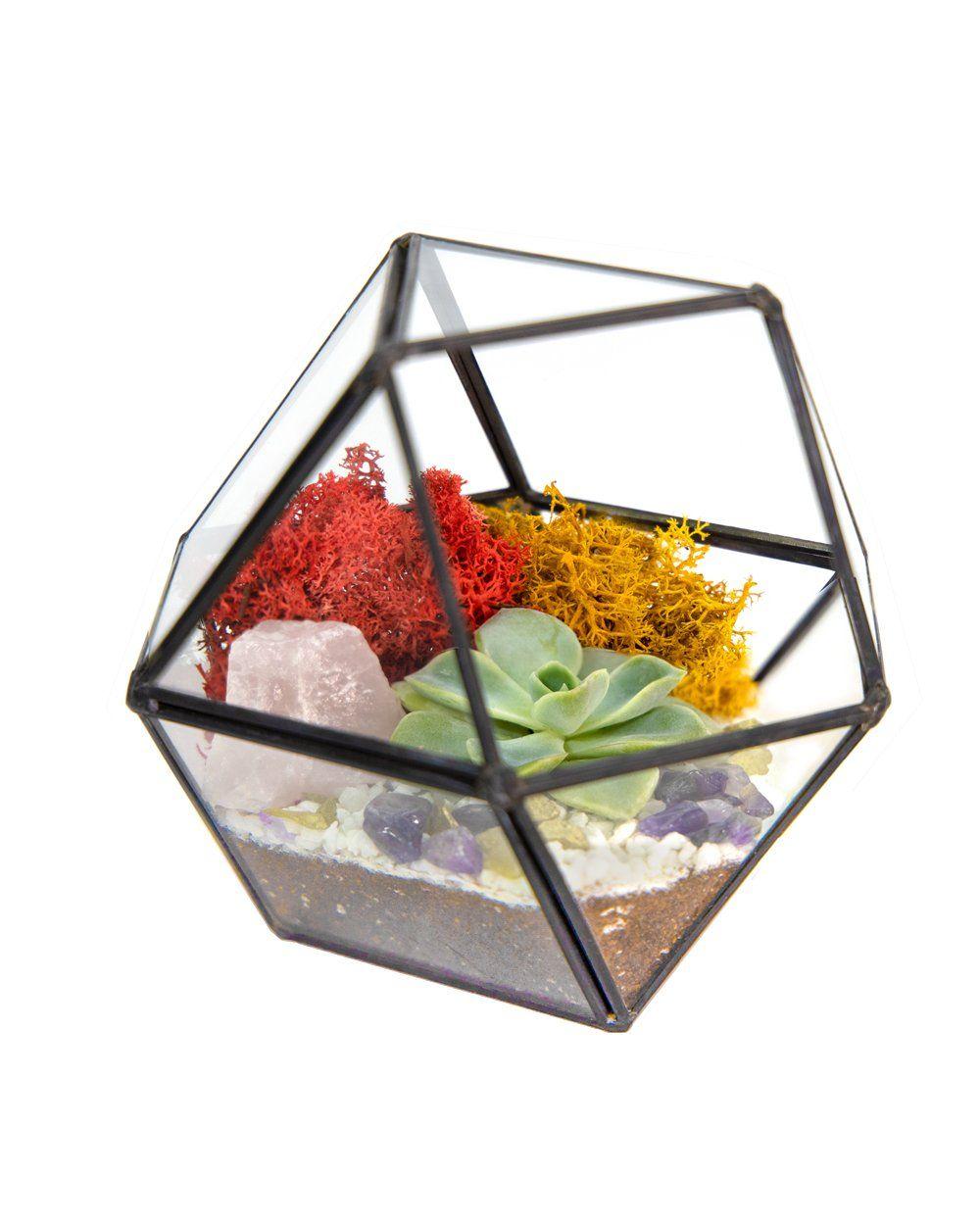 "Photo of 4""x5"" Geo Glass Succulent Terrarium with Metal Stand, Moss, Rocks, Amethyst *DIY Live Plant Terrarium Kit* – Gold/Mint / Quartz Geode"