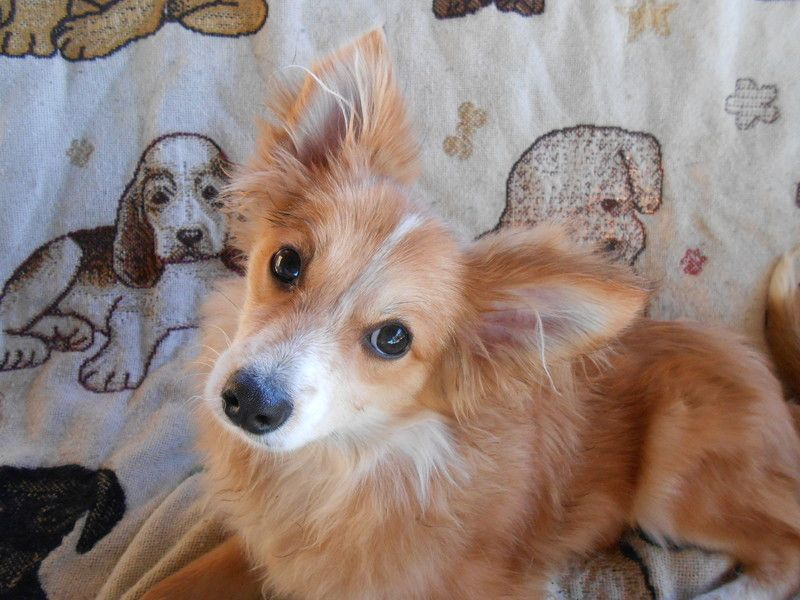 Copper weighs 11lbs, and is 5 months old. He has normal cat curiosity and medium to high energy. This guy is fun fun fun. He loves to play and will dance when he sees his humans because he is so excited. He loves everyone and wants to make friends...