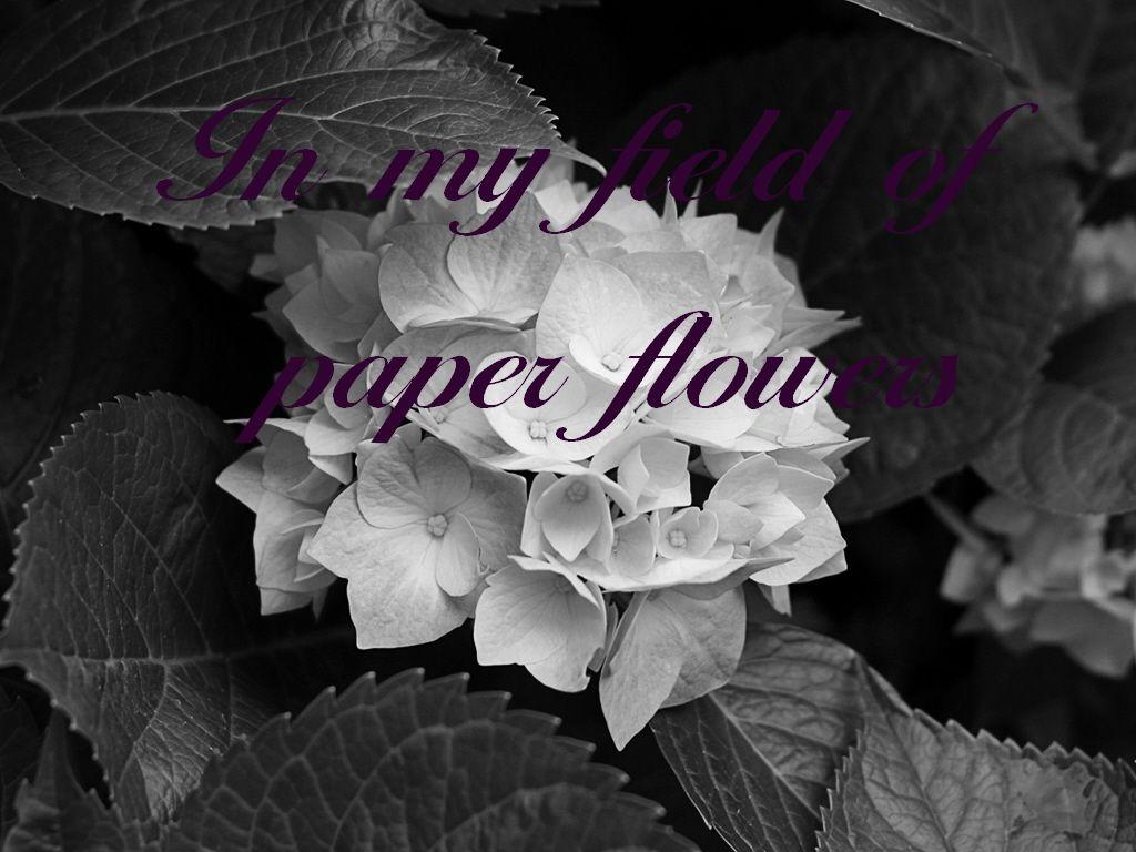 Evanescence paper flowers gardening flower and vegetables evanescence lyrics in my field of paper flowers music lyrics mightylinksfo