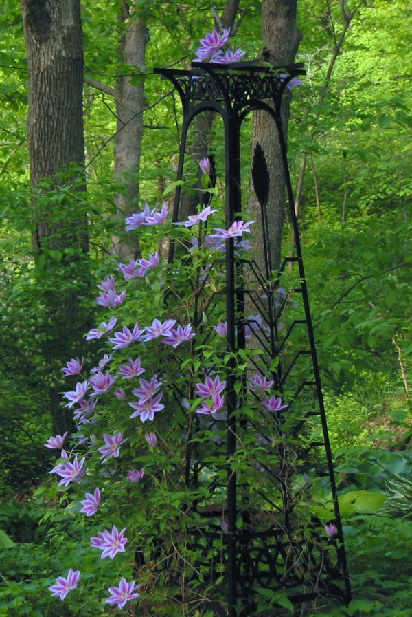 Lovely Trellis For Clematis Ideas Part - 5: Trellis Of Clematis . Garden Tower By Trellis Art Designs