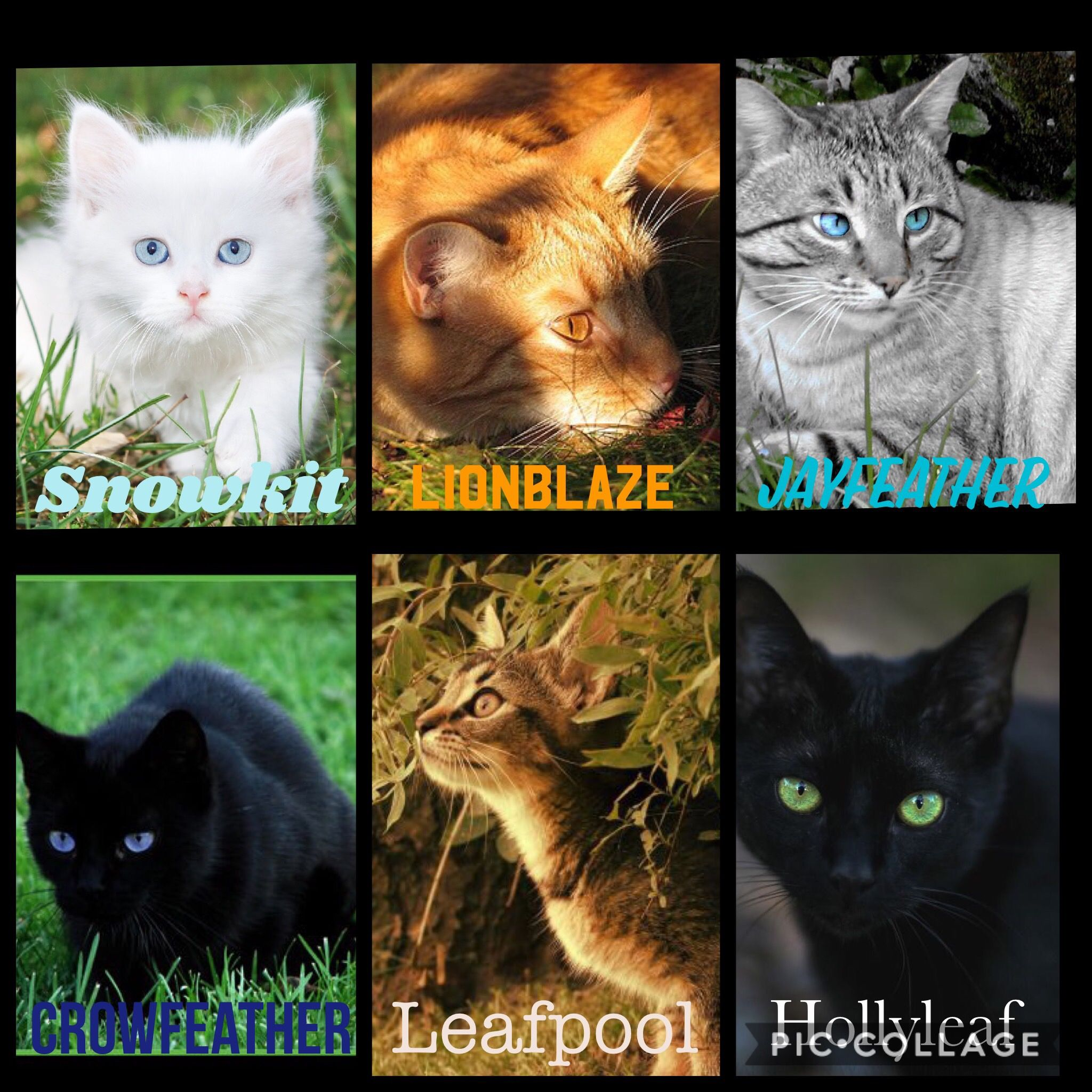 Warriors Dawn Of The Clans Characters: For Entertainment- Warrior Cat Movie