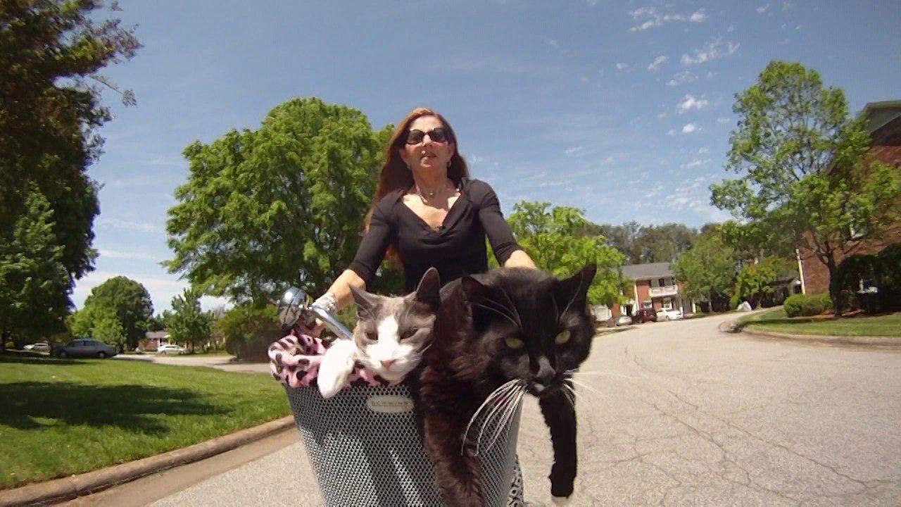 Bike Basket Joy Ride Bike Basket Stray Cat Strut Sneaky Cat