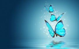 Reflexion Papillon Blue Water Fond D Ecran Hd Butterfly Wallpaper Butterfly Wallpaper Backgrounds Butterfly Background