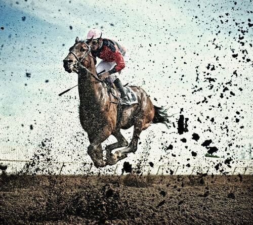 Image result for race horse epic