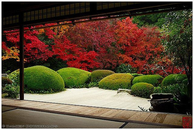 Autumn colors peaking in Shisendo temple (詩仙堂), Kyoto   by Damien Douxchamps #Autumn #colors #Japanese Garden #Japanese Garden backyard #Japanese Garden design #Japanese Garden ideas #Japanese Garden plants #Kyoto #peaking #Shisendo #Temple #詩仙堂