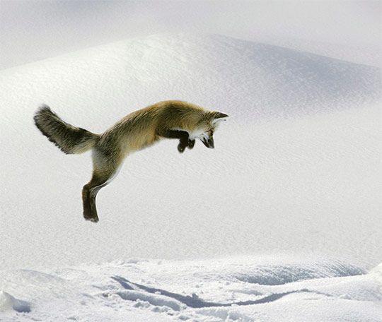 Зимний лес фото, природа. | Домашняя лиса, Сумасшедшие ...